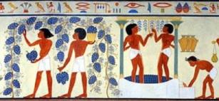 vinho-egipto