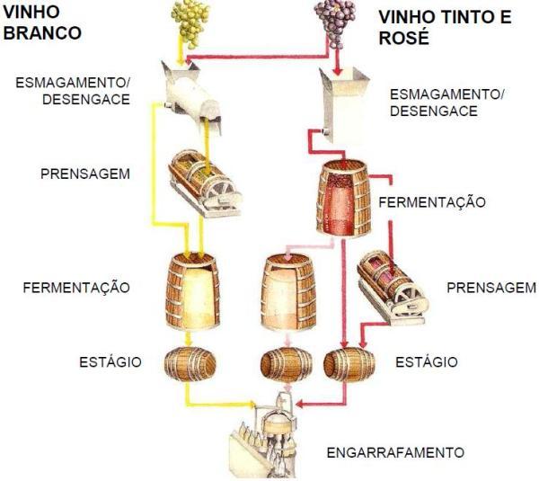 Resultado de imagem para vinificação de vinho tinto